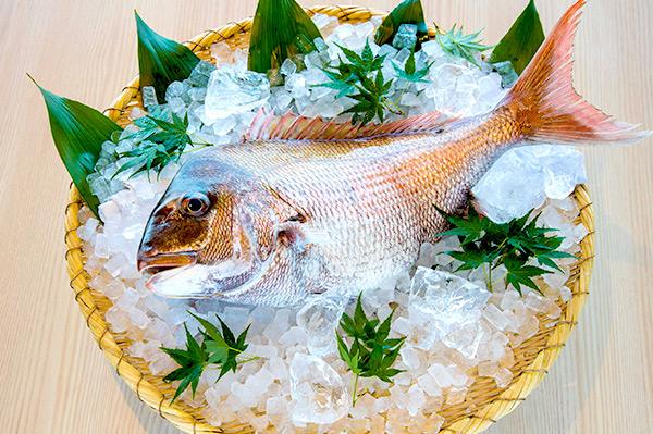 明石鯛・炙りで愉しむ初鰹と初夏の味覚