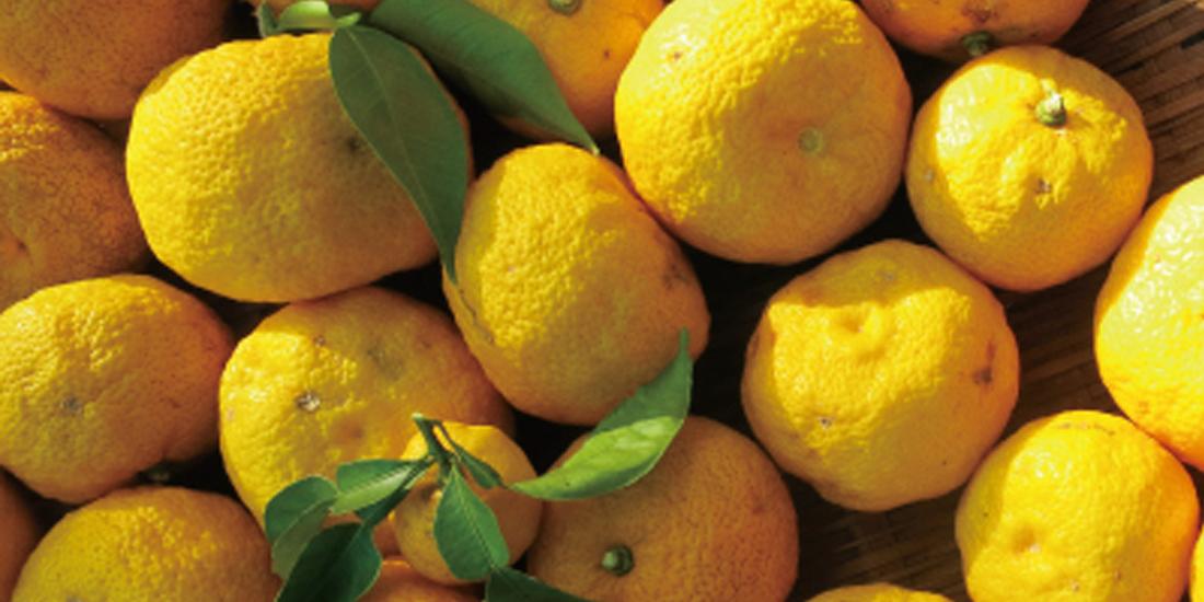 月替わり湯 12月の暦風呂「柚子湯」